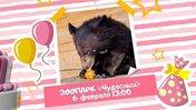 День рождения гималайских медведей Мити и Миры
