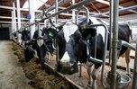 Молочная ферма появится в Уссурийске