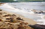 Пляжи закроют из-за коронавируса в Приморье