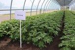 Семеноводческое хозяйство из села Пуциловка обеспечит продукцией весь Дальневосточный округ
