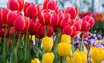 Ярмарка цветов пройдет в Уссурийске
