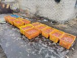 Морепродуктов на 4 миллиона рублей изъяли в Приморье