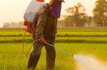 В Уссурийском городском округе выявлено загрязнение ядохимикатами земельных участков сельхозназначения