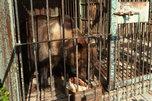 Новый зоопарк может появиться в Уссурийском городском округе