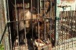 Жизнь ради косолапых: как и от кого уже много лет спасают медведей в Уссурийске
