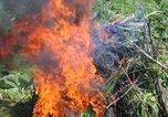 Сотрудники полиции Уссурийска уничтожили дикорастущую коноплю на площади свыше 5 гектаров