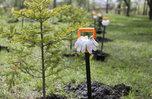 Более 12 тысяч молодых лиственниц высадили участники акции «Сохраним лес» в приморском Уссурийске
