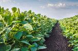«День поля» пройдет в Уссурийске с 23 по 25 сентября