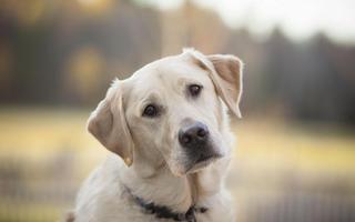 Приморские школьники нашли трупы сожжённых собак
