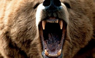 Медведь напал на женщину в зоопарке Уссурийска, «осталась без ноги»: подробности трагедии