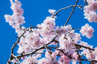 «Крымская весна» придет в Уссурийск