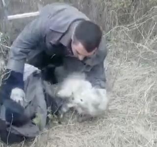 В Приморье сотрудники полиции вызволили из глубокой ямы редких животных