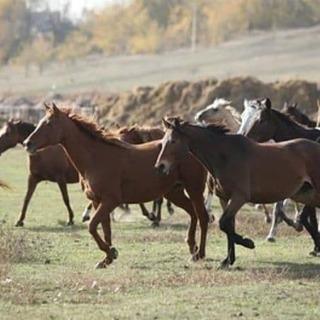 Девяносто лошадей украли за ночь у фермера в приморском селе